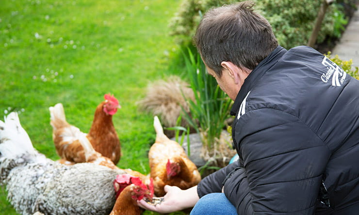 McGuinness and his chickens