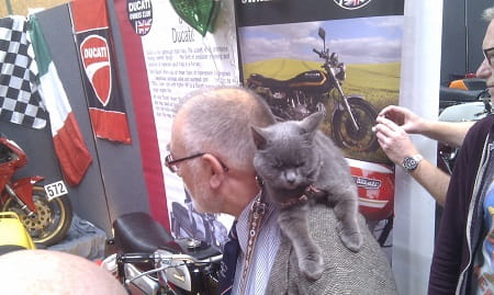 Yes love, I'm just taking the cat out for a walk...to the Stafford Classic Show.